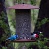 nature, wildlife, photograph, photography, image, behavior, bird, birding, Maine