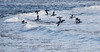 Phippsburg, Maine, waterfowl, birds, Sagadahoc County