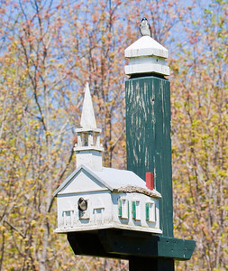 Tree swallows, one in the doorway and one perched on post top, replica of The Popham Chapel, Phippsburg Maine, spring