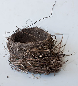 bird's nest, probably a thrush judging from the mud cup. Phippsburg Maine