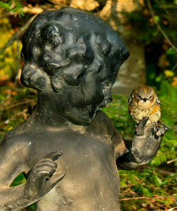 """Myrtle,"" Yellow-rumped warbler perched on statuary finger, my coastal Maine Phippsburg garden, October 2008"
