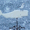 Herring Gull In Snow On Weathervane