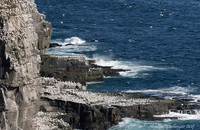CAPE ST. MARY'S ECOLOGICAL RESERVE