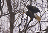 Dalmatia Pa. Eagles, it is great to have a new Eagles nest in this area.
