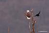 22709-EAGLE2-102BN