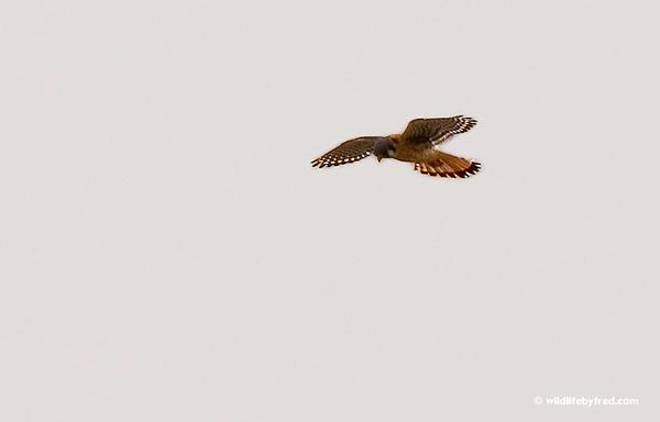 122008-hawks2-028N