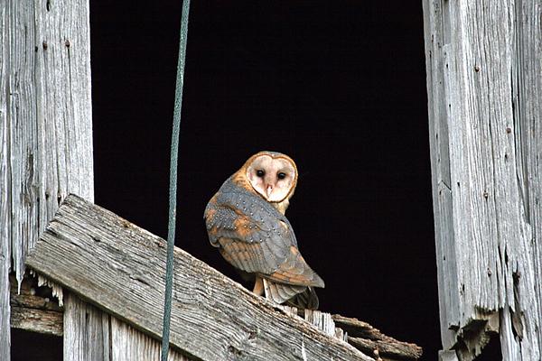 OWLS713069N