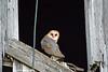OWLS713069