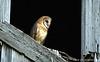 OWLS7130642