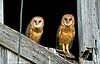 OWLS7130664