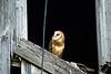 OWLS7130636