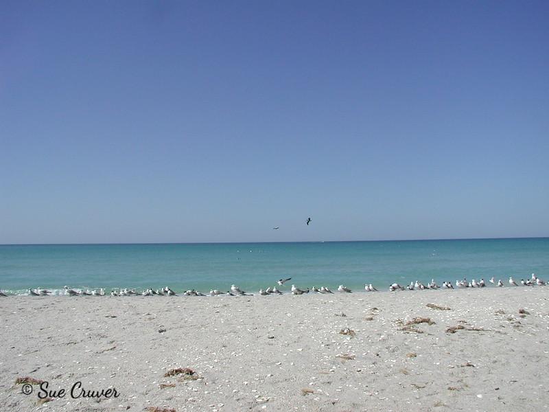 Florida Beach Birds