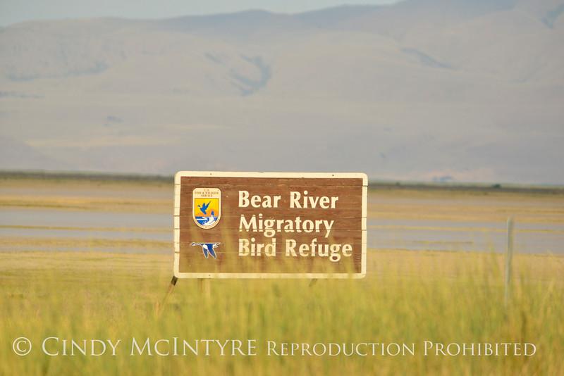 Bear River NWR UT (1)