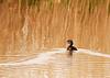 Bear River Migratory Bird Refuge, Utah