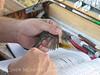 Dusky Flycatcher, JIBS, GA 10-1-2012 (5)