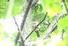 Maine Spring Birds_0001