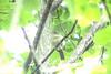 Maine Spring Birds