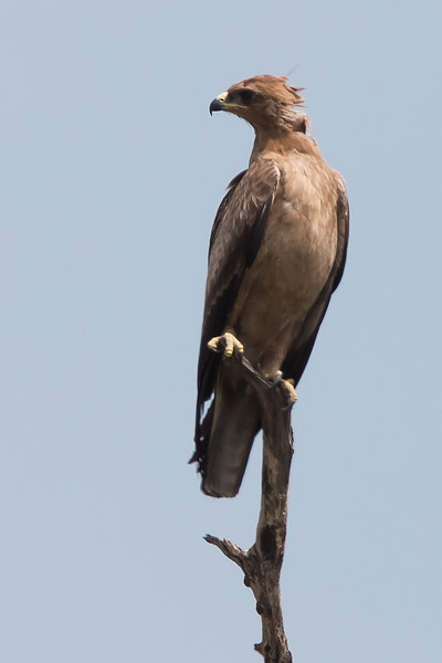 _MG_1598 Wahlbergs eagle