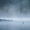 Common Loon in a blue mist fog on a Boundary Waters lake [BWCA Minnesota] Gavia immer