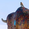 A colorful bird perched on a colorful sculpture; American Kestrel [February; Antelope Island, Salt Lake City, Utah]