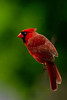cardinal 1317