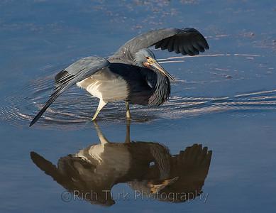 Best of Florida Birds