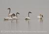 Sacramento National Wildlife Refuge, California