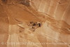Cliff Swallow mud nests Chaco Canyon (9)
