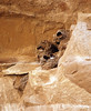 Cliff Swallow mud nests Chaco Canyon (16)