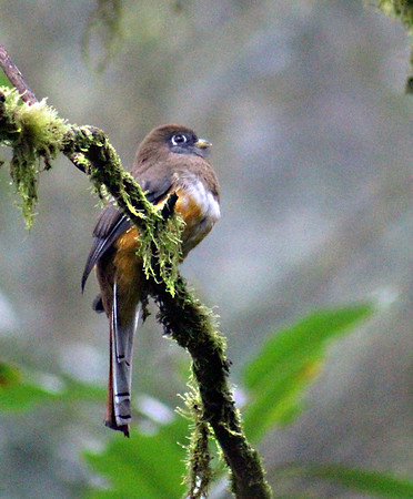 2017 Nov 6-10 - Villa Blanca Cloud Forest Resort & Nature Reserve