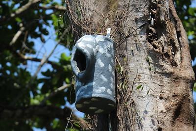 Scarlet Macaw Nest Box