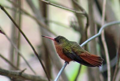 BIRDS Cerro Lodge