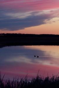 ducks silhouette sunset Agassiz NWR MN IMG_6306
