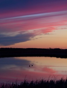ducks silhouette sunset Agassiz NWR MN IMG_6302