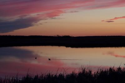 ducks silhouette sunset Agassiz NWR MN IMG_6295