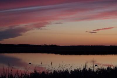 ducks silhouette sunset Agassiz NWR MN IMG_6284