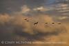 Canada geese in flight, Hayden CO (7)