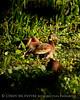 Black-bellied whistling ducks, FL