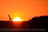Pelican at sunset, FL (2)