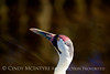 Whooping Crane, Homosassa Springs SP FL (27)