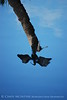 Anhinga reflection, Green Cay FL (2)
