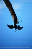 Anhinga reflection, Green Cay FL (1)