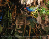Purple Gallinule and Reflections 6