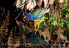 Purple Gallinule and Reflections 4