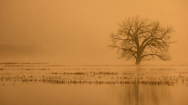 Western Grebe Horsehead Lake Kidder County ND  IMGC7569