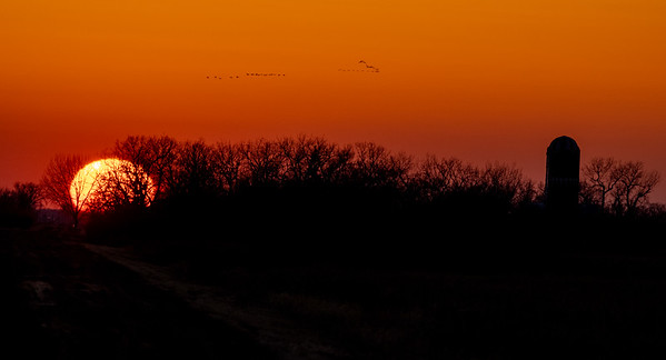 goose flock over sunset and silo Otter Tail County MN IMGC5275