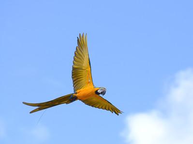 General World Birds