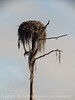 Osprey nest in Dec, Banks Lake NWR GA
