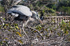 Blue Heron new mom 2