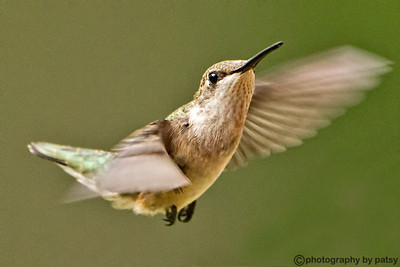 HUMMINGBIRDS HUMMINGBIRDS